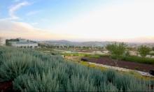 المشهد الطبيعي للنباتات البرية الغذائية في فلسطين | بيرزيت
