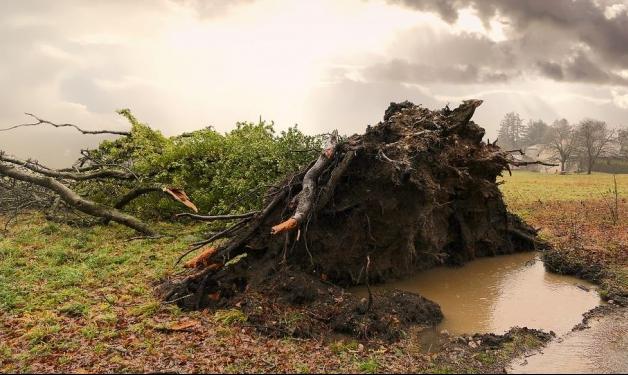 أوغندا: مصرع 17 طفلا وبالغ واحد بسبب الأمطار الغزيرة