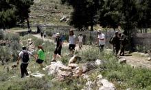 مستوطنون يقتحمون قرية الجيب ويلقون موادا سامة بيطا