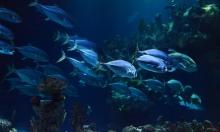 تكيّف جيني حافظ على بقاء السمك في قاع البحار