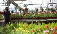 أزهار غزة
