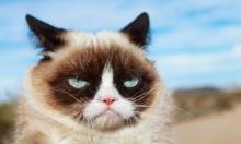 """وفاة """"غرامبي كات"""".. القطة الأغنى في العالم"""