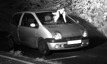"""ألمانيا: حمامة """"ملاك حارس"""" تحمي سائقا من مخالفة والشرطة تُعقّب"""