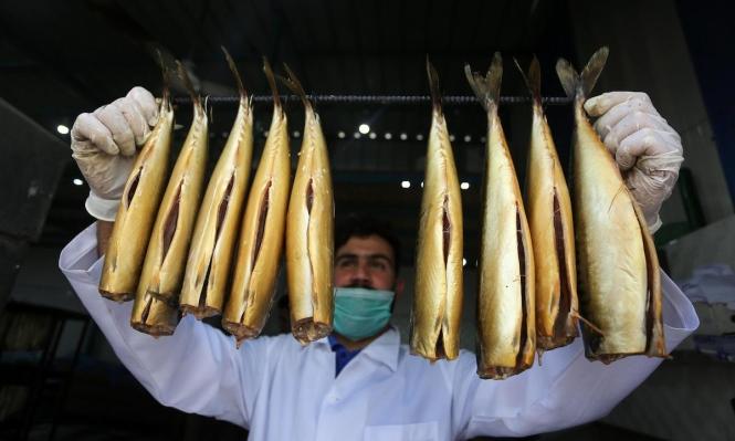 إعداد السّمك المُدخّن في مخيم رفح للاجئين جنوب قطاع غزة