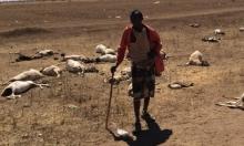 مليونا صومالي قد يتضورون حتى الموت جوعا بدون مساعدات