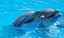 عروض الدلافين: قتل واستغلال