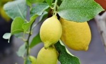 سعر كيلو الليمون في مصر ينافس اللحم