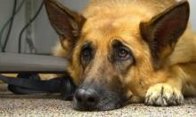 لمذا تبدو عيون الكلاب حزينة كعيون الأطفال؟