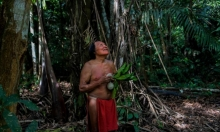 حماية الشعوب الأصلانية بالأمازون ضرورية للحافظ على المناخ العالمي