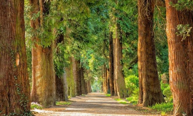 تريليون شجرة هي الحل الأمثل لتغير المناخ
