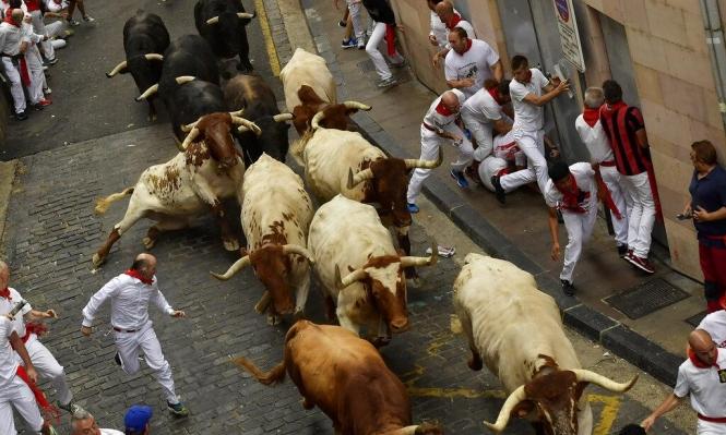 إسبانيا: إصابة 5 متسابقين في مهرجان للركض أمام الثيران