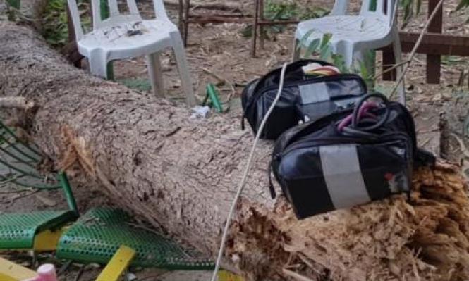 مصرع طفل عربي سقطت عليه شجرة بمتنـزه جنوبي البلاد