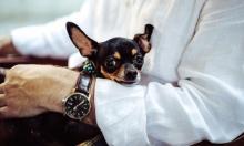 الحيوانات الأليفة يمكنها تخفيف الآلام المزمنة للمُسنين