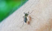 دراسة تحذر من الانتشار المتزايد لسلاسلات الملاريا المقاومة للعلاج