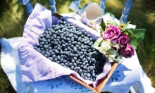 التوت الأزرق يحمي من أمراض الشيخوخة
