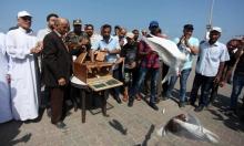 سباق للحمام الزاجل في غزة