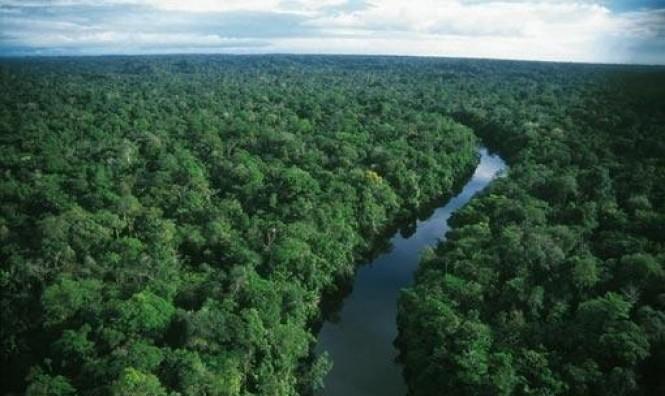 تزايُد تدمير غابات الأمازون بـ 278% في تموز