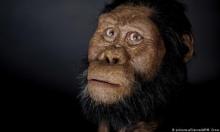 علماء يعثرون على جمجمة لكائن يُعتقد أن الإنسان انحدر منه