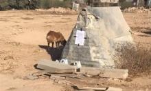 السلطات الإسرائيلية تخطر بهدم بيت كلب