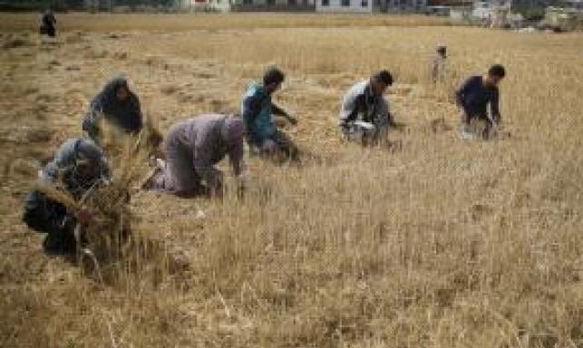 الاحتلال يطلق النار تجاه الأراضي الزراعية شرقي غزة