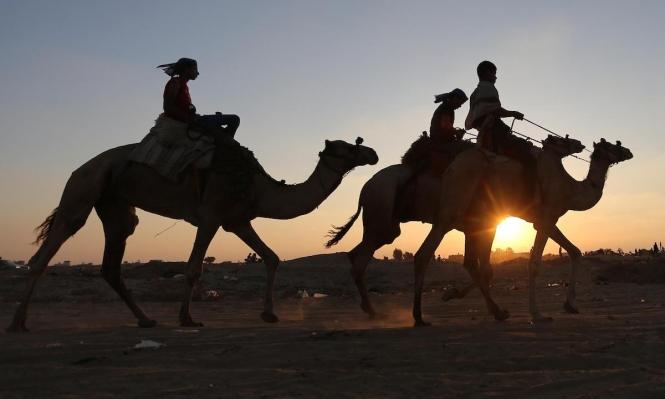 أنقاض مطار رفح مضمار لسباق الجمال في غزّة