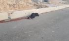 استشهاد امرأة أصيبت برصاص الاحتلال قرب حاجز قلنديا