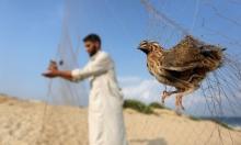 عصفور عالق في شبكة على شاطئ غزّة