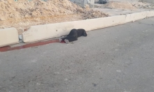 استشهاد فتاة أصيبت برصاص الاحتلال قرب حاجز قلنديا