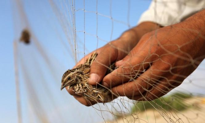 تحرير عصفور من شِباك عَلِق فيها أثناء تحليقه فوق شاطئ غزّة