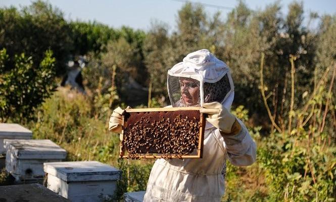 غزّة: الفلسطينية سمر البُع تواجه البطالة بتربية النحل