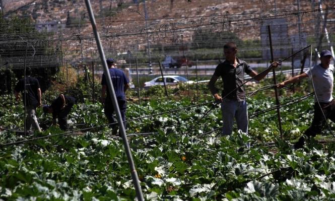 الاحتلال يهدد بوقف استيراد المنتجات الزراعية من الضفة الغربية