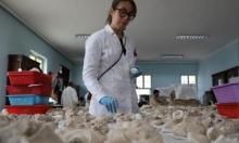 أفغانستان: متحف يحاول ترميم آثار بوذية دمرتها طالبان