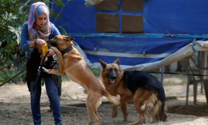 غزة: الحيوانات الأليفة... أصدقاء تحت الحصار  يفتقدون للعناية الطبية