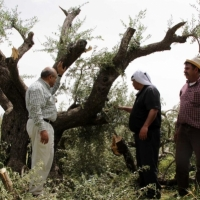 السلطة الفلسطينية تحذر من مخطط إسرائيلي لتقسيم الضفة