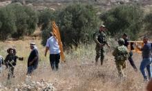 الضفة: المستوطنون وجنود الاحتلال يواصلون الاعتداء على قاطفي الزيتون