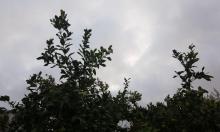 حالة الطقس: غائم جزئيا وأمطار محلية محتملة شمالي البلاد