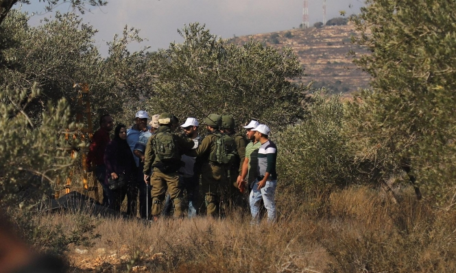 تواصل اعتداءات المستوطنين على قاطفي الزيتون وسرقة المحاصيل
