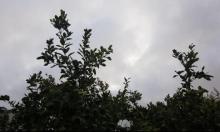 حالة الطقس: صاف وبارد نسبيا