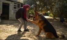 فلسطينيّة من غزّة تمتهن ترويض الكلاب