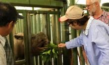 انقراض وحيد القرن السومطري بماليزيا بعد نفوق آخر أنثى
