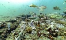 أسماك وشعب مرجانية، ماذا تخفي البحار في أعماقها؟