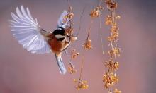 دراسة تبيّن تطور العصافير: تضاؤل مذهل بالأحجام