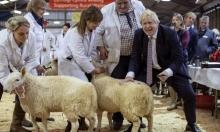 """بريطانيا: انتخابات تشريعية لحسم مصير """"بركست"""""""