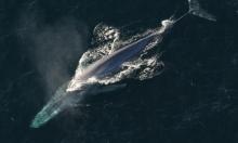 وزارة البيئة المصرية تتبرأ من أصوات مرعبة لحيتان