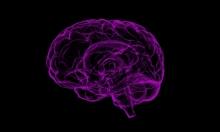 الحمية الغذائية عالية الدهون تضر بنمو الخلايا العصبية لدى النساء