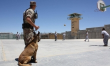 الولايات المتحدة توقف إرسال كلابها المدربة للسلطات المصرية والأردنية