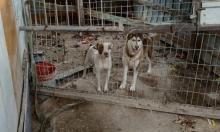 الرينة: اعتقال شاب احتجز كلابا بظروف سيئة