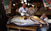 اليابان: بيع سمكة تونا بـ1.8 مليون دولار