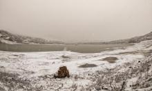 الجولان السوري المحتلّ بحلّة بيضاء بعد تساقط الثلوج