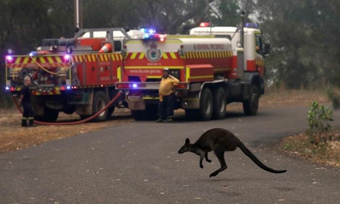 """أستراليا: """"مليار حيوان قد نفقت في الحرائق"""""""